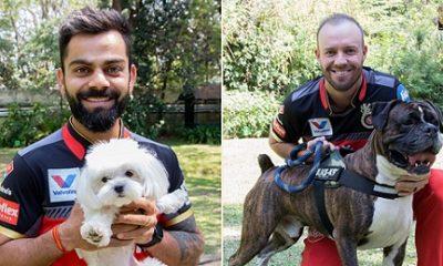 IPL Dog Day